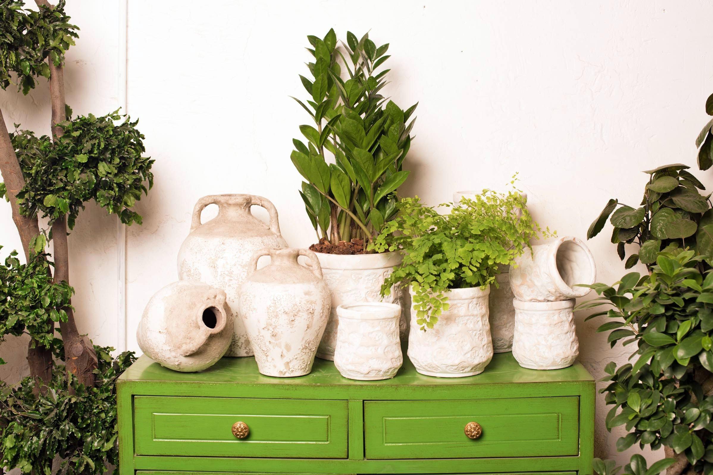 Mueble verde con macetas y Plantas - Margarita Se Llama Mi Amor - Floristería en Madrid