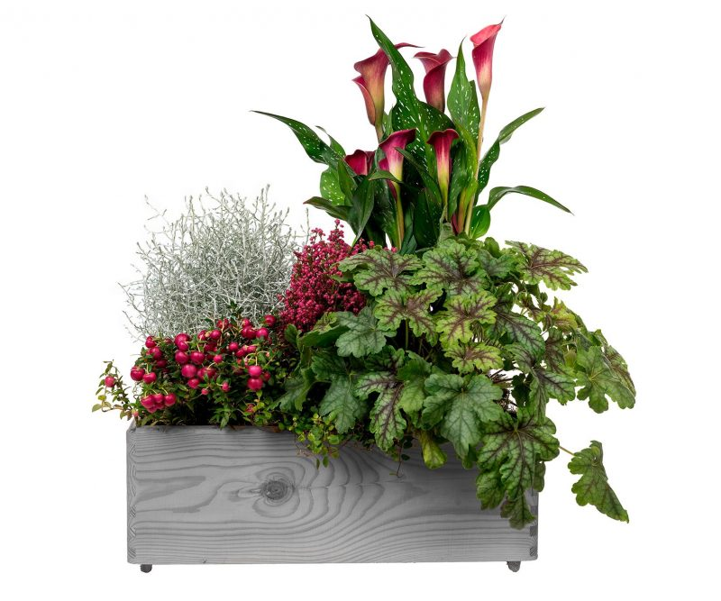 Plant Nº 06 Plant Mix in wooden box  - Florist in Madrid Margarita se llama mi amor