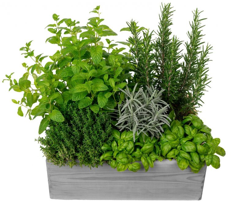 Plant Nº 07 Aromatic Plants Mix in wooden box   -Florist in Madrid Margarita se llama mi amor