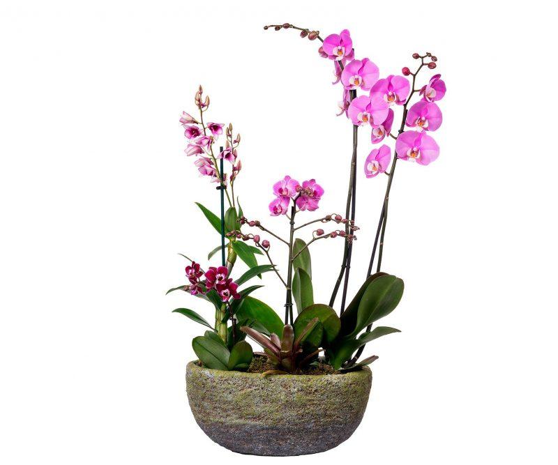 Planta Nº 17 Orquídeas mix en maceta ovalada - Floristería en Madrid Margarita se llama mi amor
