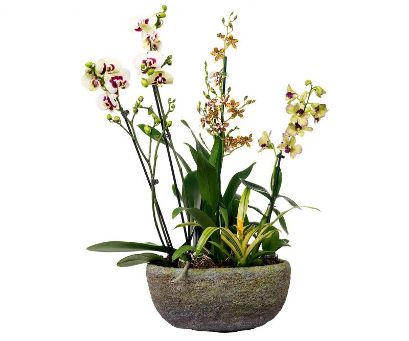 Plant Nº 14 Orchid Mix with Bromelia in oval pot   - Margarita se llama mi amor