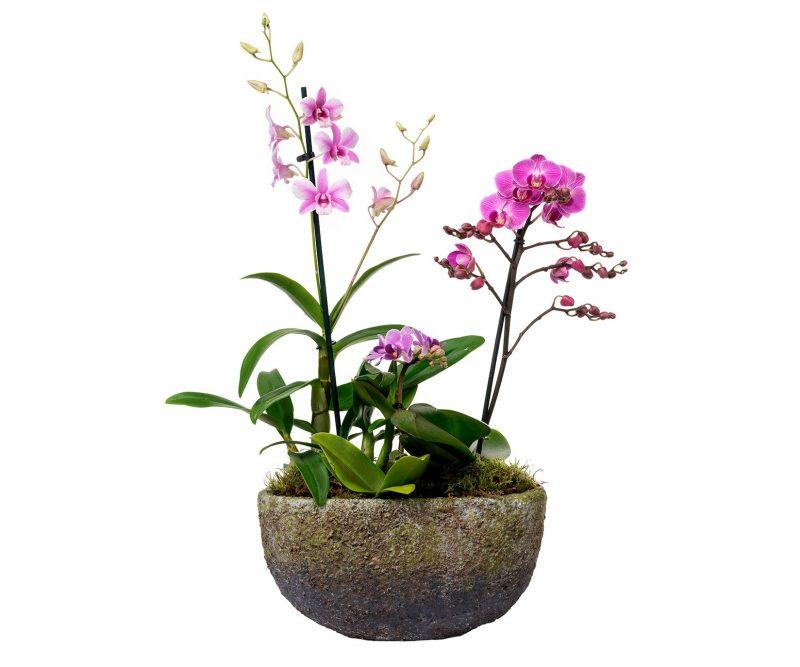 Planta Nº 12 Orquídeas mix en maceta ovalada