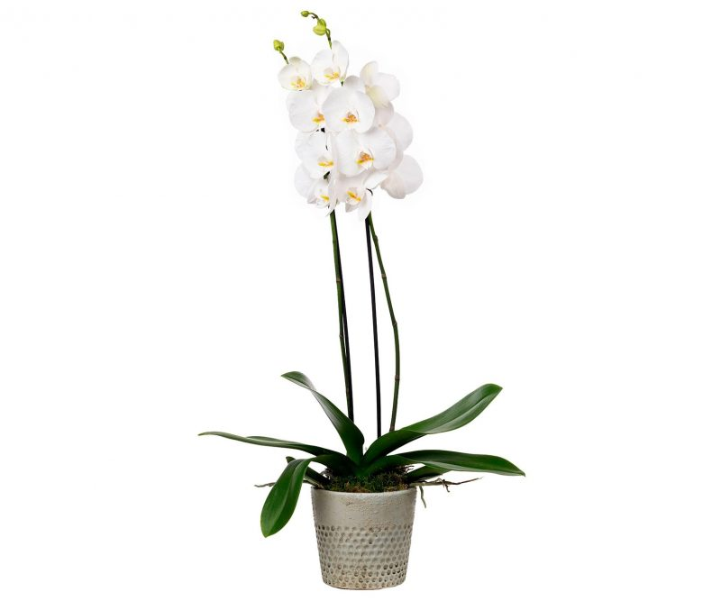 Planta Nº 18 Orquídea blanca en maceta de cerámica - Margarita se llama mi amor